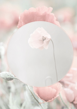 roze-klaproos_WEB