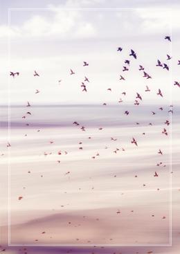 vogel-lucht_WEB